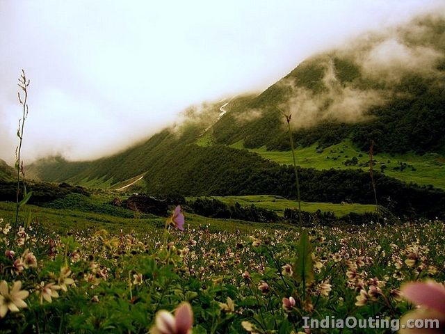 Beautifying Valley of Flowers